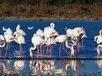 Fenicotteri rosa nell'oasi naturale di SALINA MONACI