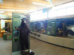 Inside the Nicandri Nature Center. One of the many attractions at the nearby Robert Moses State Park