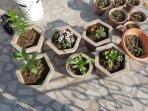 Blooming Terrace Garden