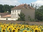 logis and gite through the sunflowers