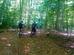 Mtb in Foresta Umbra
