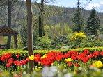 Spring at Seguinet.
