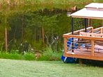 the deck overlooking the pond stock with fish .Enjoy watching the wildlife aswell ...