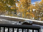 Winter is ushering fall out quickly.  Open the front door to beautiful views every day when you vacation in this condo.
