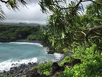 Beautiful sights on the Road to Hana.