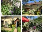 Summer in the cottage gardens