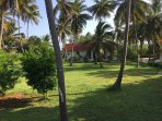 The villas are set in a beautiful old coconut grove