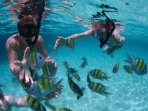 We are happy to provide you with snorkel gear.  The fish and reefs are amazing.