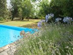 pool area, securely fenced in; agapanthus and lavender blooming all summer