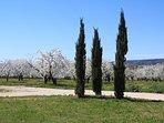 Cerisiers en fleurs au pied de la maison
