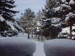 Morning snow fall covering evergreens. Break out the cross country skis or snow mobile for fun!