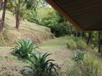 Grassy solar walkway to casita from main house.. Private, fenced and gated.