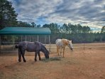 You'll love seeing the horses roam the pasture on the property.