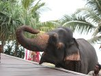 we can arrange an elephant for the day to feed and bath. This contributes to the elephants upkeep
