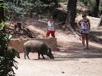 A trip to the Sierra Espuna National park (45 mins) and you could meet these guys