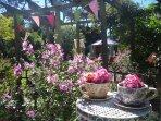 The guest garden...