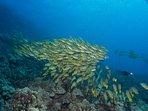 Maui reef fish
