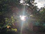 Sunrise at the Jungle paradise