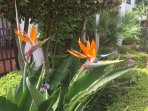 The exotic Bird of Paradise flower is just one of many beautiful plants to be found in the gardens