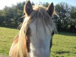 Camilla, our Welsh pony loves a nose-tickle