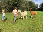 Our kids will be happy to introduce you to our alpacas