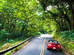 The famous road to Hana with so many photo opts and gorgeous memorable scenery, waterfalls & hikes