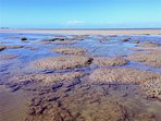 Coral flats of Bell Reef at South Wonga Beach