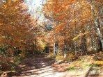 alentours en automne