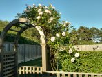 The rose arbor leading to the backyard.