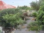 Le jardin depuis la terrasse de la piscine