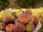 free figs in every August