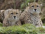 Tibo and Baro - the stars of Dartmoor Zoo