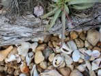 Pool bed with shells collected from many stunning nearby beaches - we are happy to suggest beaches.