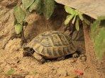 Turtle Josefine