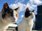 Wonderful clean and friendly cats that liven the vicinity of the villa.We provide cat food.