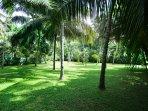 The beautiful garden of the hostel