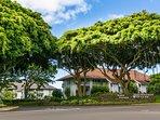 Beautiful Banyan Trees at the Kiahuna Entrance