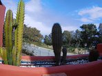 View north through the cacti from the stairs to the roof terrace.