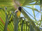 Go bird watching, right from the porch. Scott's Orioles hang out & cardinals, wood peckers, osprey.