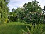 Wellrose garden in June