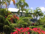 Rosebay is encircled by colorful tropical landscaping