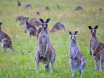 Surround yourself with Australian wildlife at Top of the River, Kangaroo Island