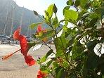 Pretty Kalkan flowers