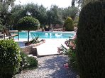 The pool set amongst the olive trees