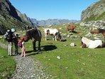 Los niños y las familias son los principales protagonistas en verano, con maravillosas excursiones.