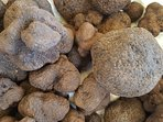 Black winter truffles; Uzès hosts truffle markets and activities throughout January