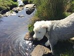 Our Dog enjoys the doggy paddock complete with fresh water stream