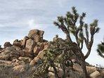 Joshua Tree National Park- Hidden Valley Trail