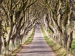 GoT® 'The Dark Hedges'  69km.