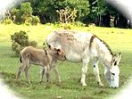 See baby donkeys in the forest